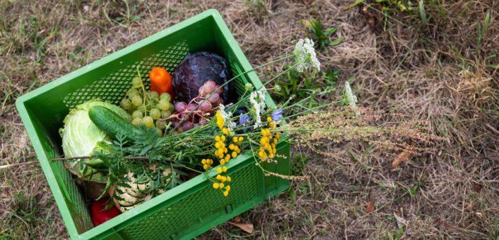 PlantAge now preparing for biocyclic vegan certification