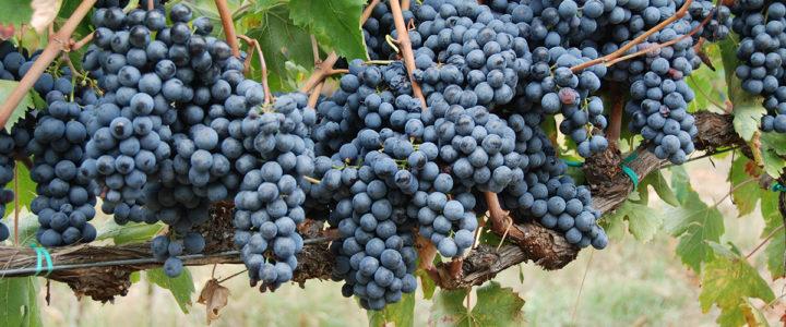 Dutch online store HET WIJNMAGAZIJN introduces biocyclic vegan wines