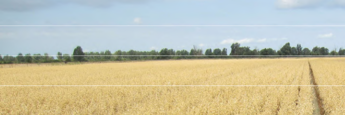 Study in the Netherlands shows: An organic arable farming system without animal manure is quite feasible and delivers sufficient yields